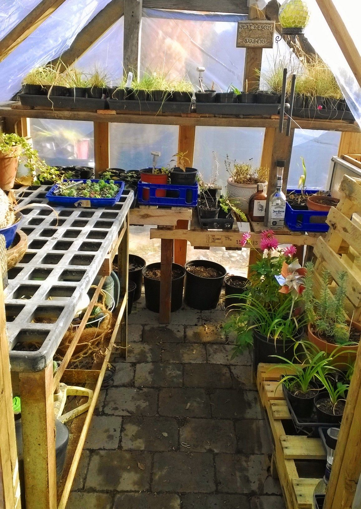 Of Greenhouse Shelving Used Pallets