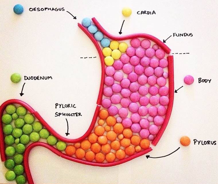 Stomach Upper Gi Tract Hereditary Angioedema Hae Pinterest