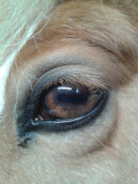 Horse Eye Animals Pinterest Horse Eye And Animal