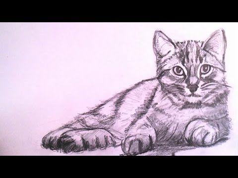 Como Dibujar un Gato Realista a Lapiz Paso a Paso  YouTube
