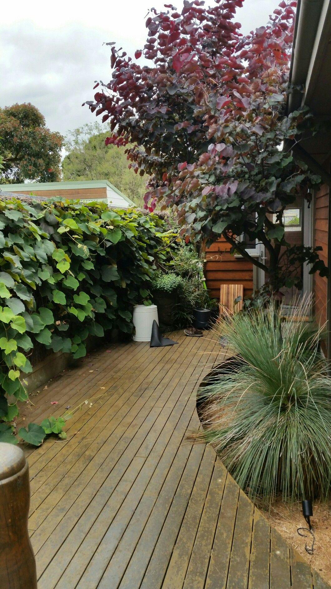 Pin by erica on davies street garden pinterest street and gardens