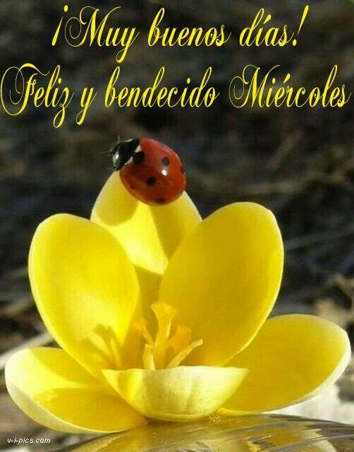Muy Buenos Días Feliz Y Bendecido Miércoles Frases Pinterest