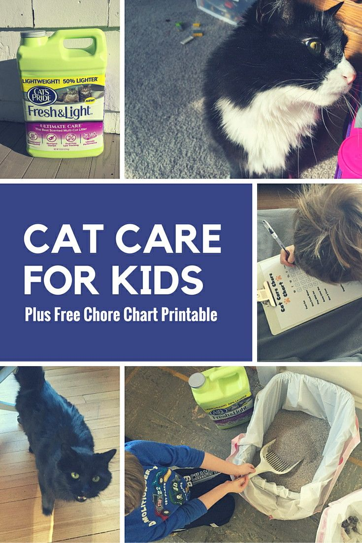 Teaching Kids How To Care For Cats + Printable Cat Care