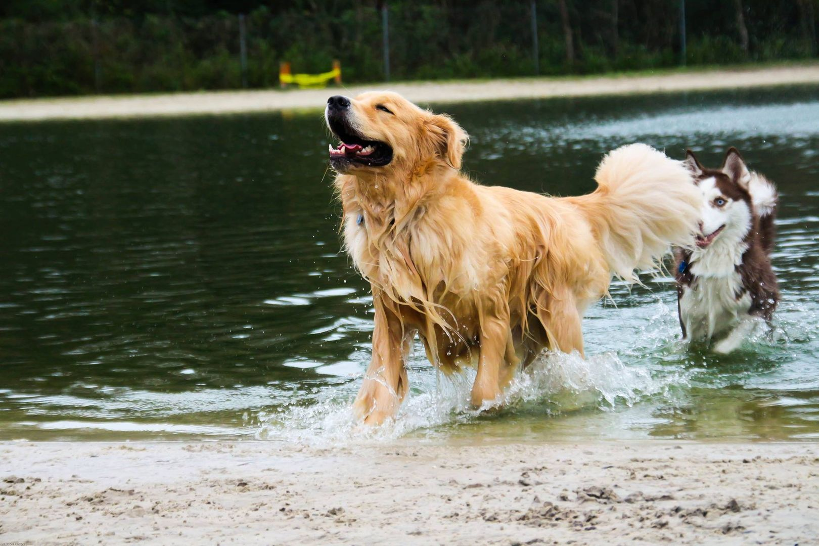 One Of The Nation 39 S Largest Off Leash Dog Parks Lake For Swimming Hiking Trails Self Serve Bathing Training Classes A Dog Park Dog Leash Hiking Trails