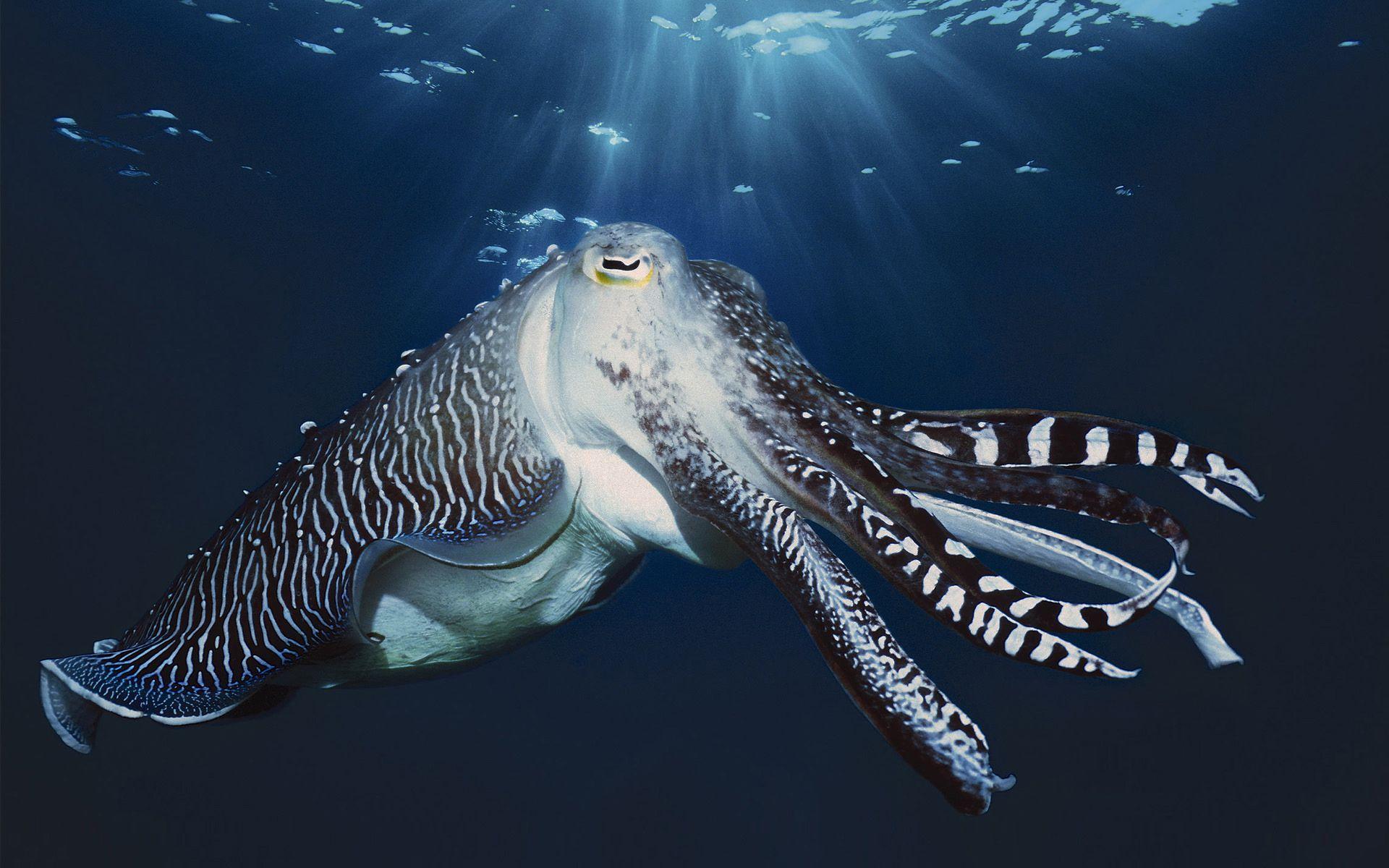 marine life definition - Google Search   Marine Life   Pinterest ...
