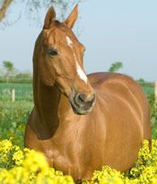 Natural Remedies For Gas Colic In Horses