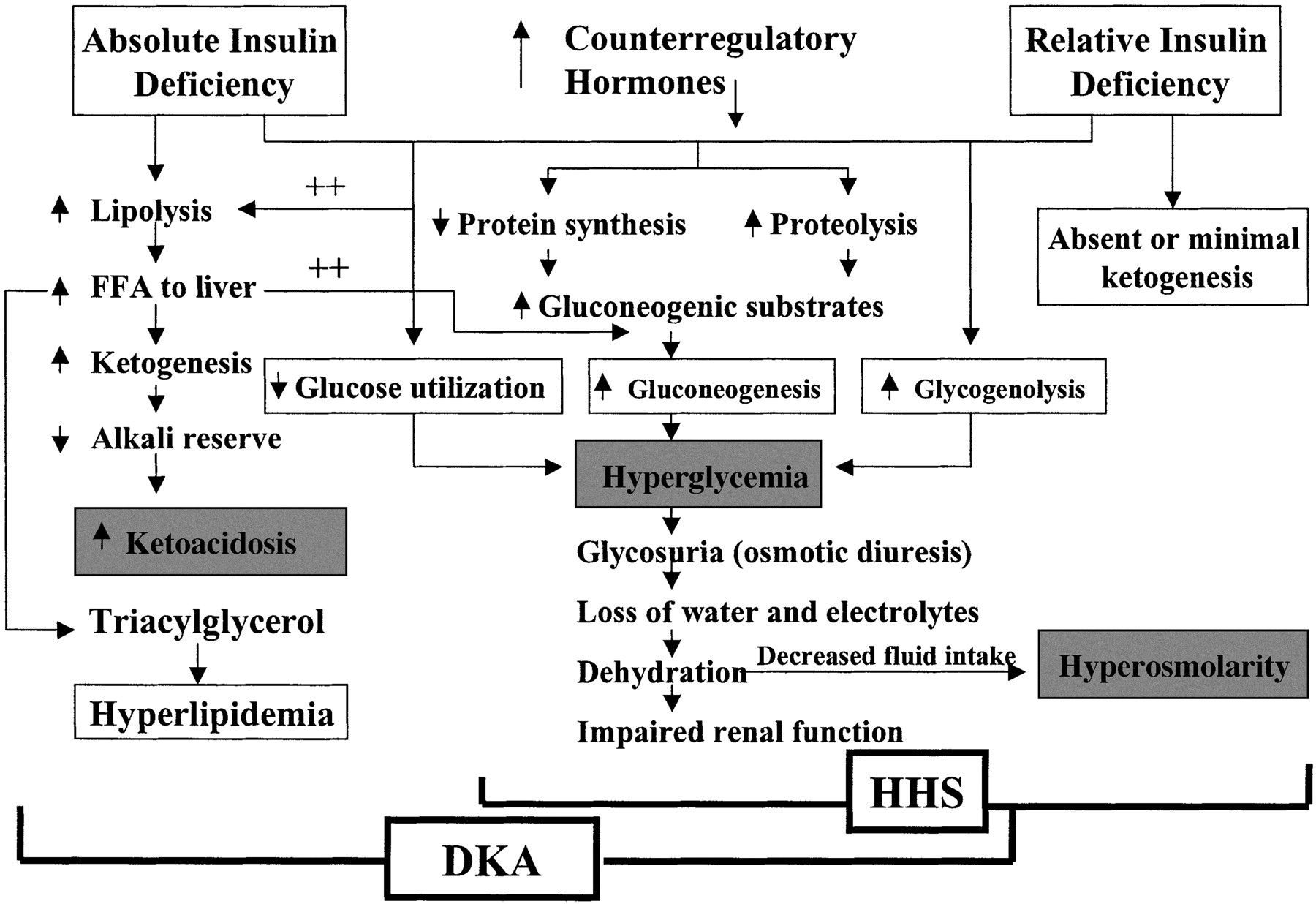 Pathogenesis Of Dka And Hhs Stress Infection And Or