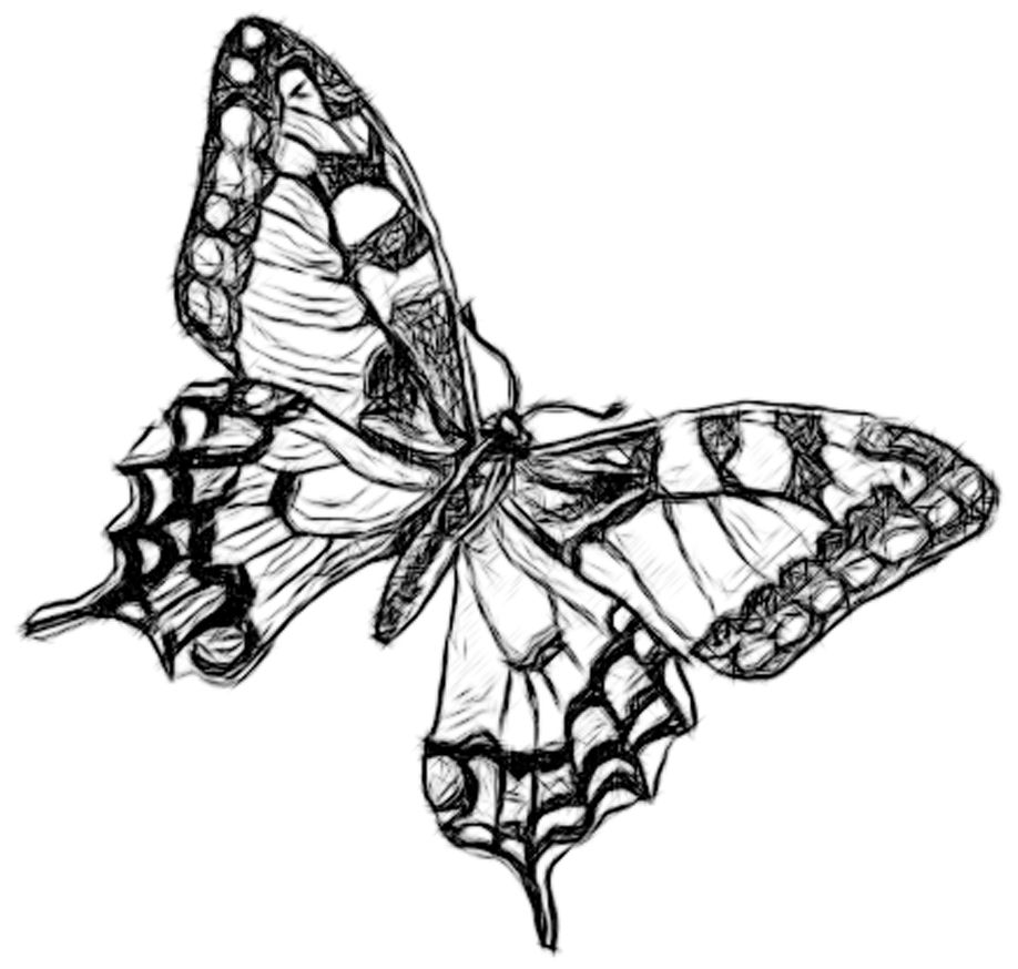 Line Drawing Pencil and Charcoal Art Galleries: Butterfly Penicl ...