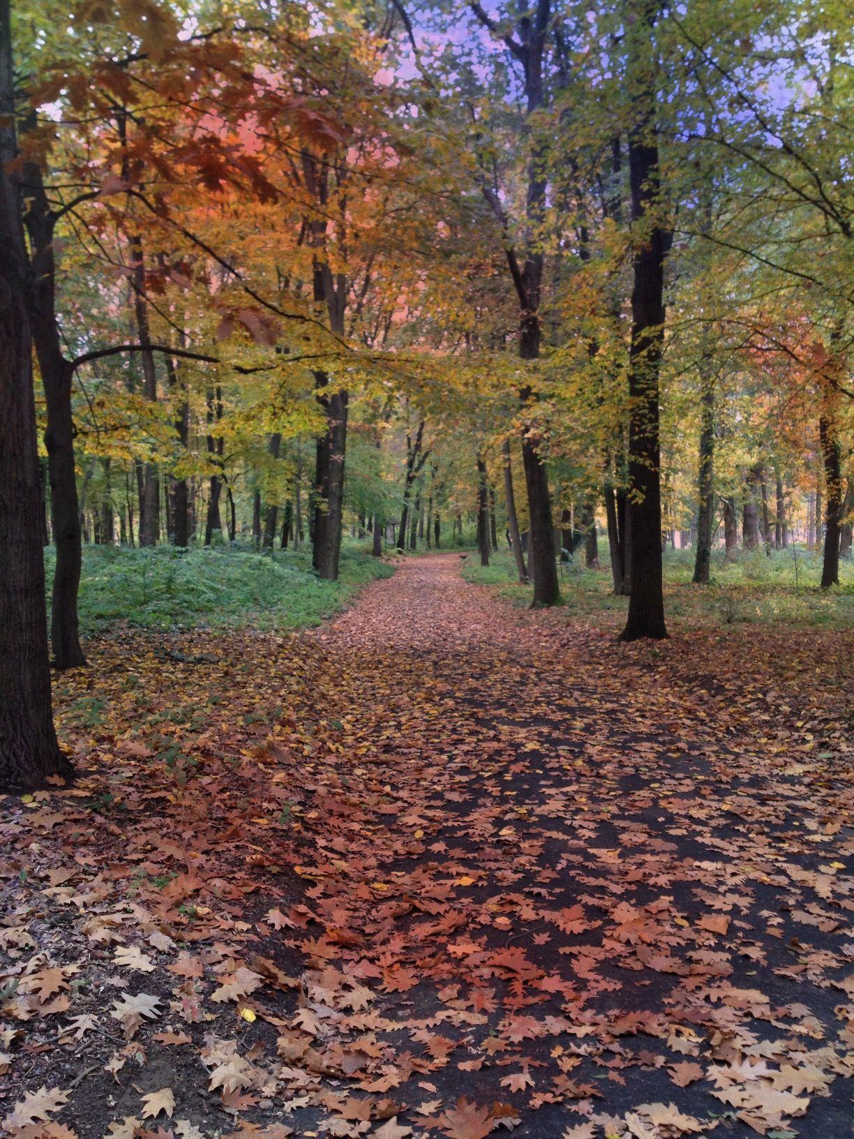 Metsä syksyllä
