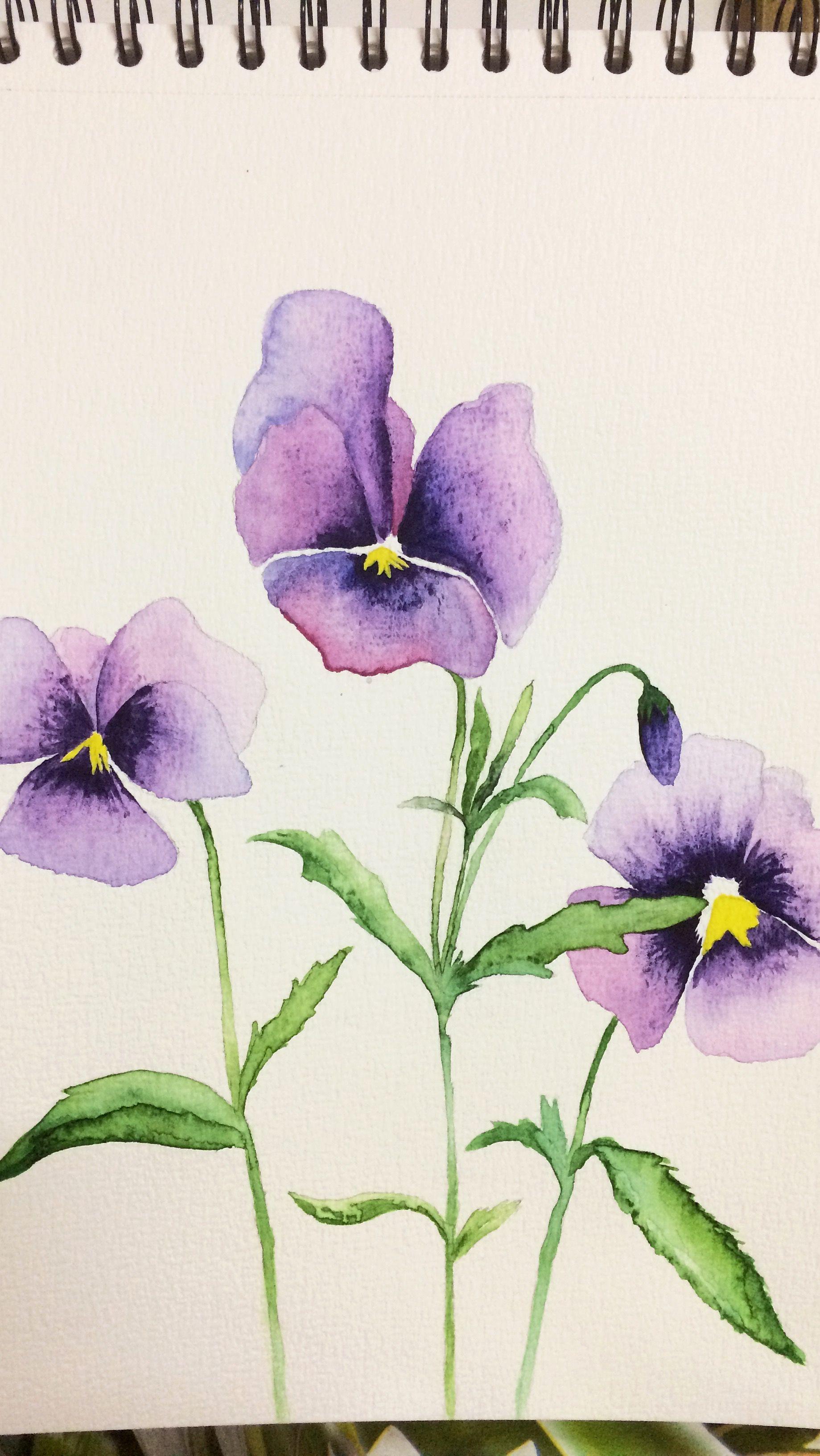 Mor Menekse Watercolor Flowers Paintings Watercolor Art Watercolor Illustration