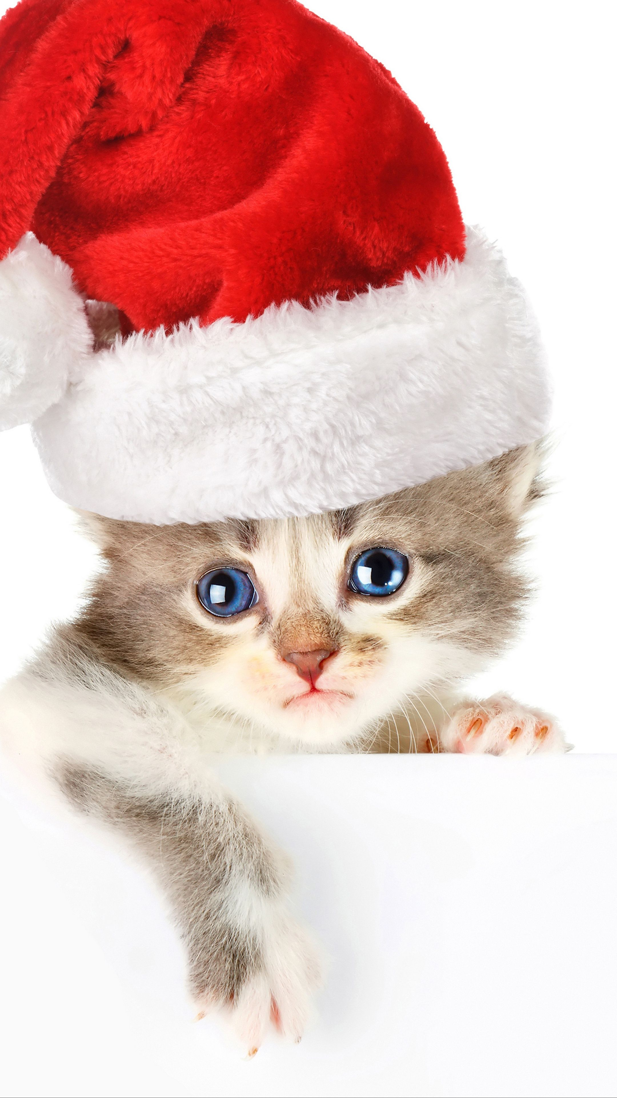 Animals Cat Hat Face Wallpapers Hd 4k Background For Android Cats Christmas Cats Christmas Kitten