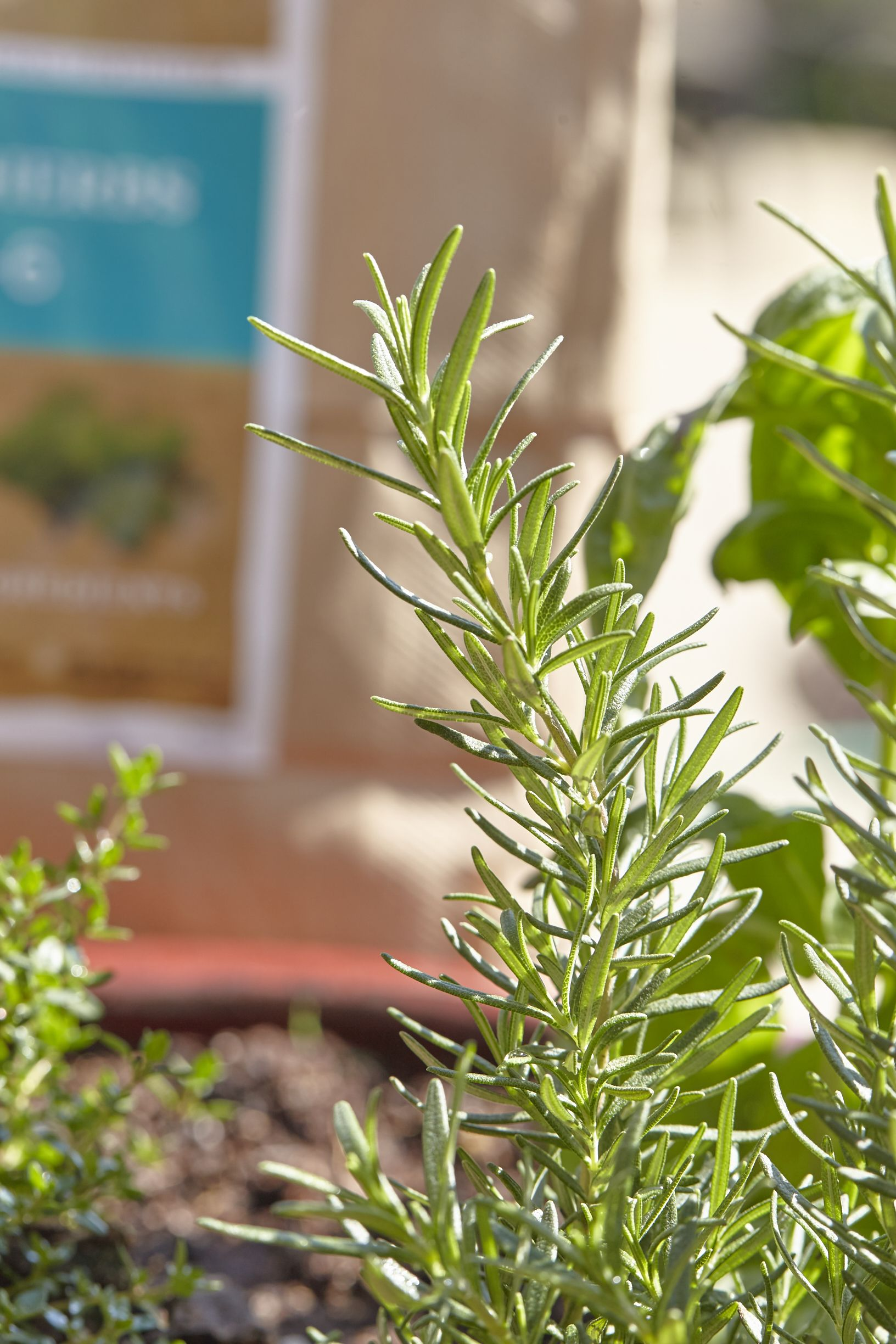Pin To Keep Your Windowsill Herb Gardens Happy Healthy 400 x 300
