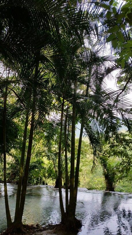 Rainforest, Tabasco MX