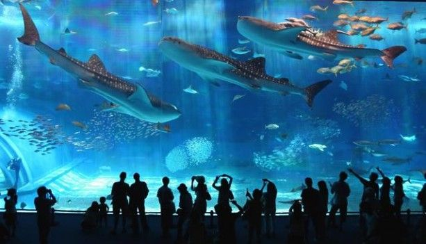 Barcelona Aquarium 2 Rainy Day Plans Amazing Aquariums