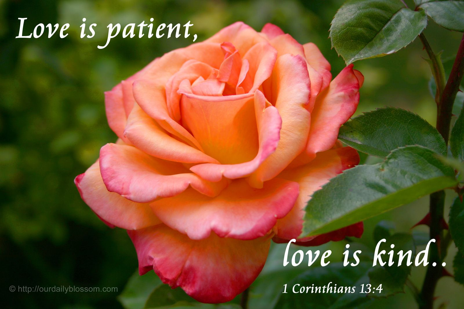 Bible Quotes About Roses Quotesgram Words Of Exhoratation Bible