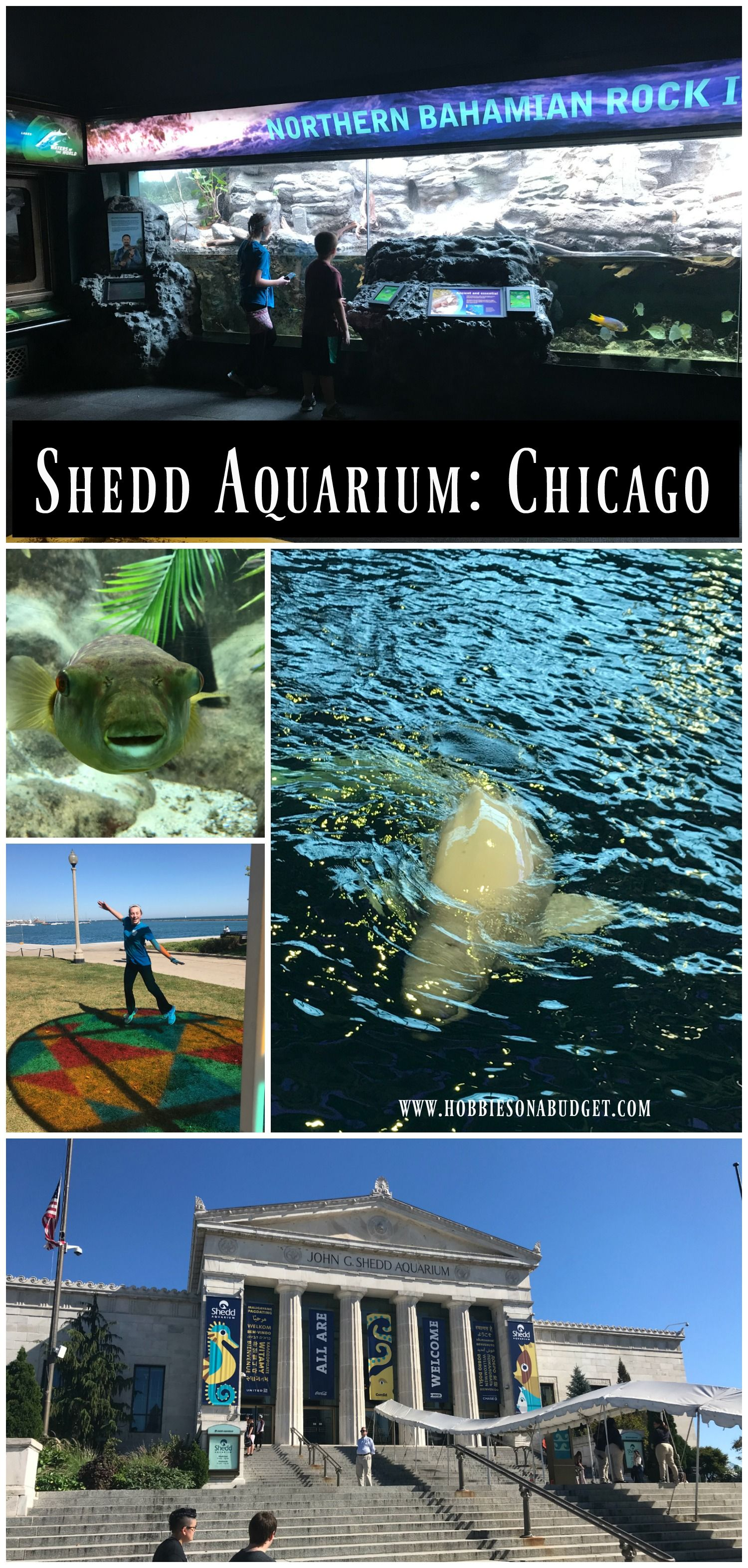 Things to Know about Shedd Aquarium in Chicago Illinois
