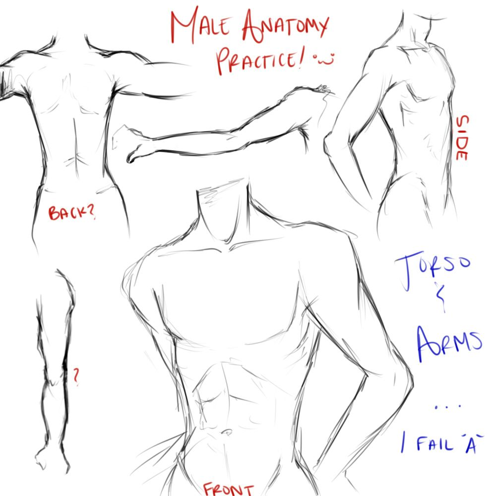 anime guy drawing - Google Search | Anatomy for the Artist ...