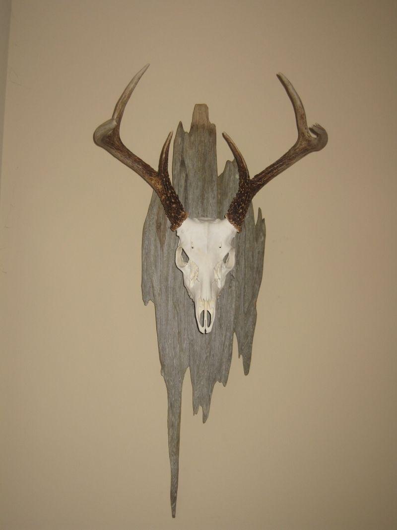 Deer skull mount ideas - Home European Deer Mounts