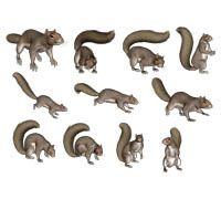 Lenagold - Clipart - Protein 2 | Baby squirrel, Squirrel ...