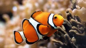 Image result for ocean fish