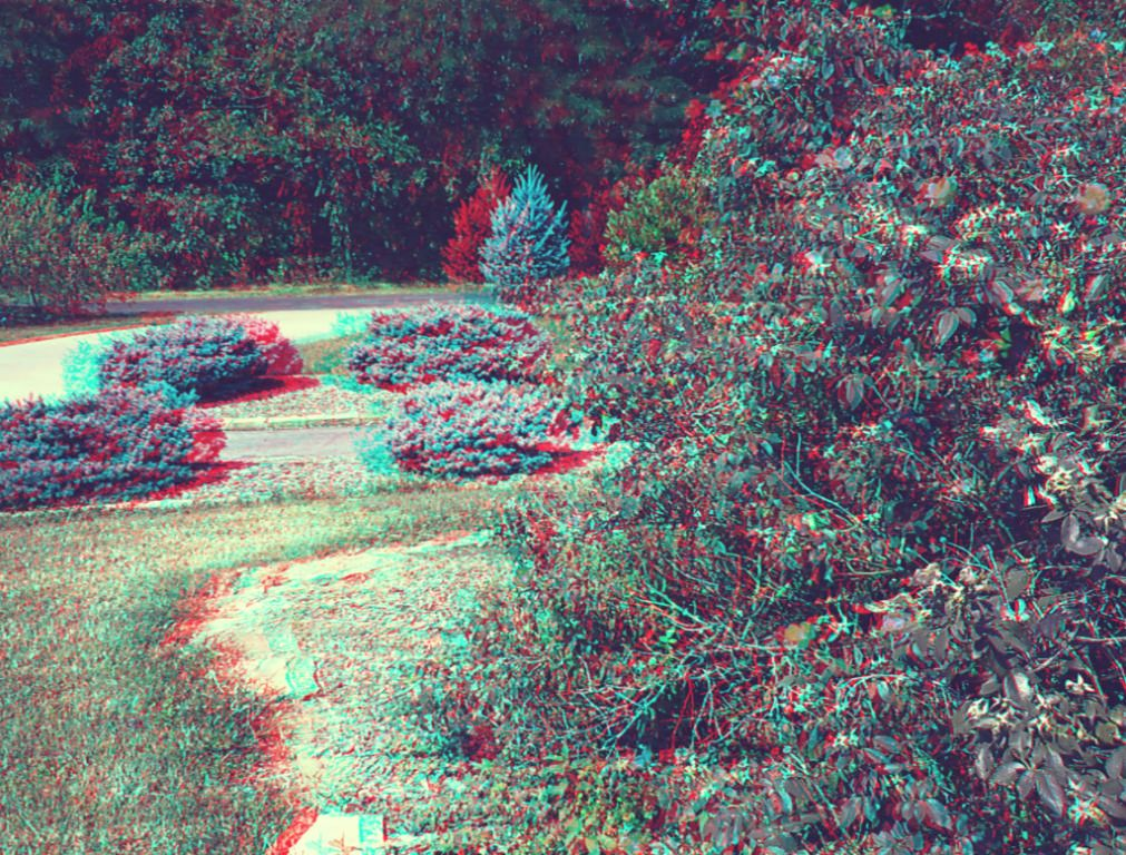 Stereoscopic photo of Red Flowers & Pines Hosted on Phereo com click
