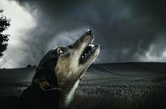 Apoquel Dog Drug With A Dark Side Anxious Dog Pet Dogs Animals