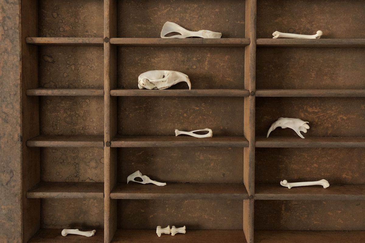 12+ How to clean animal bones images