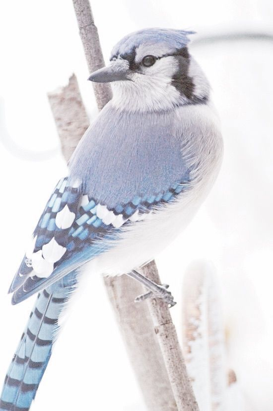 Winter Blue   Blue Winter