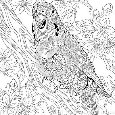 Zentangle Budgie Parrot Coloring Page More Pins Like This ...