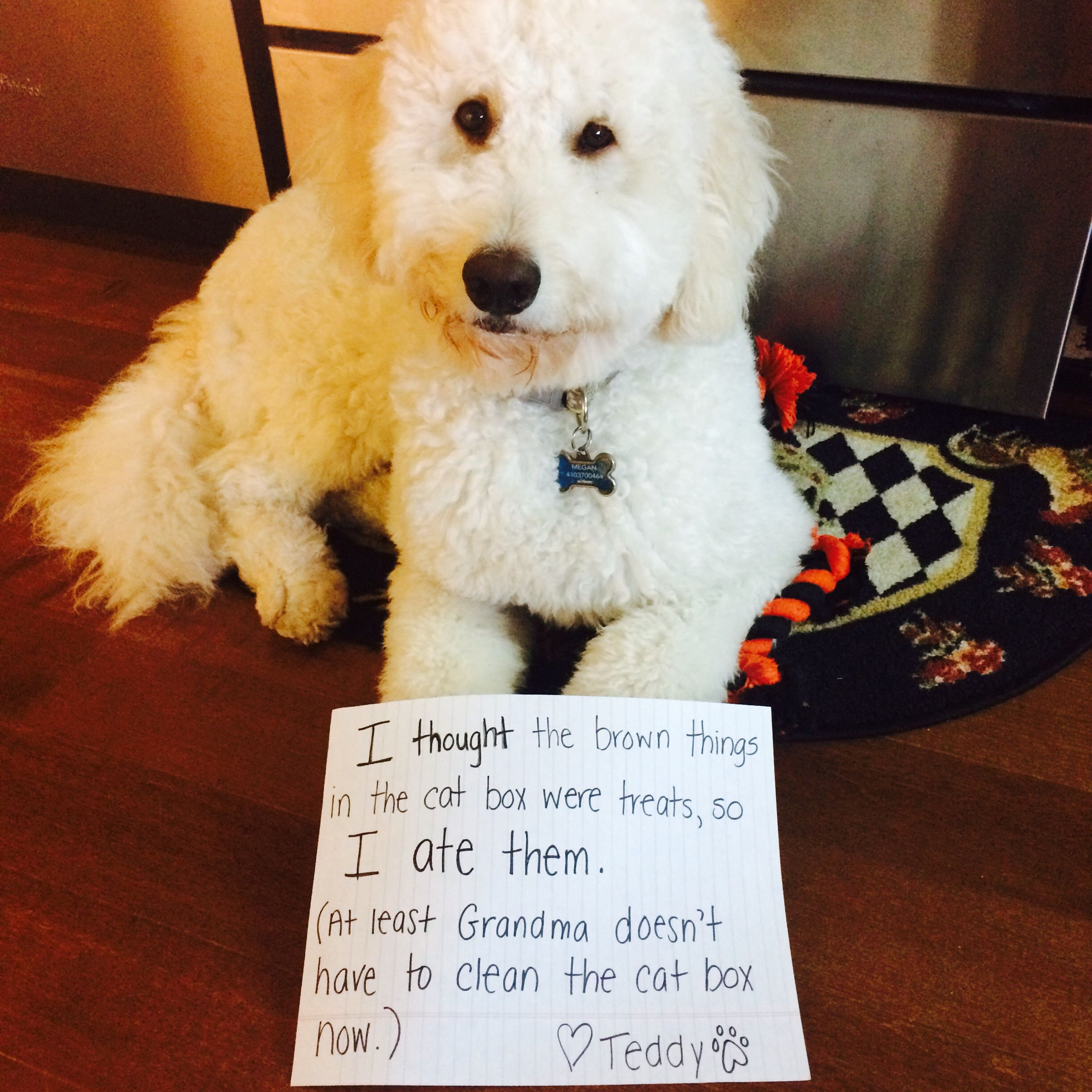 8 Reasons Why You Shouldnt Own A Goldendoodle