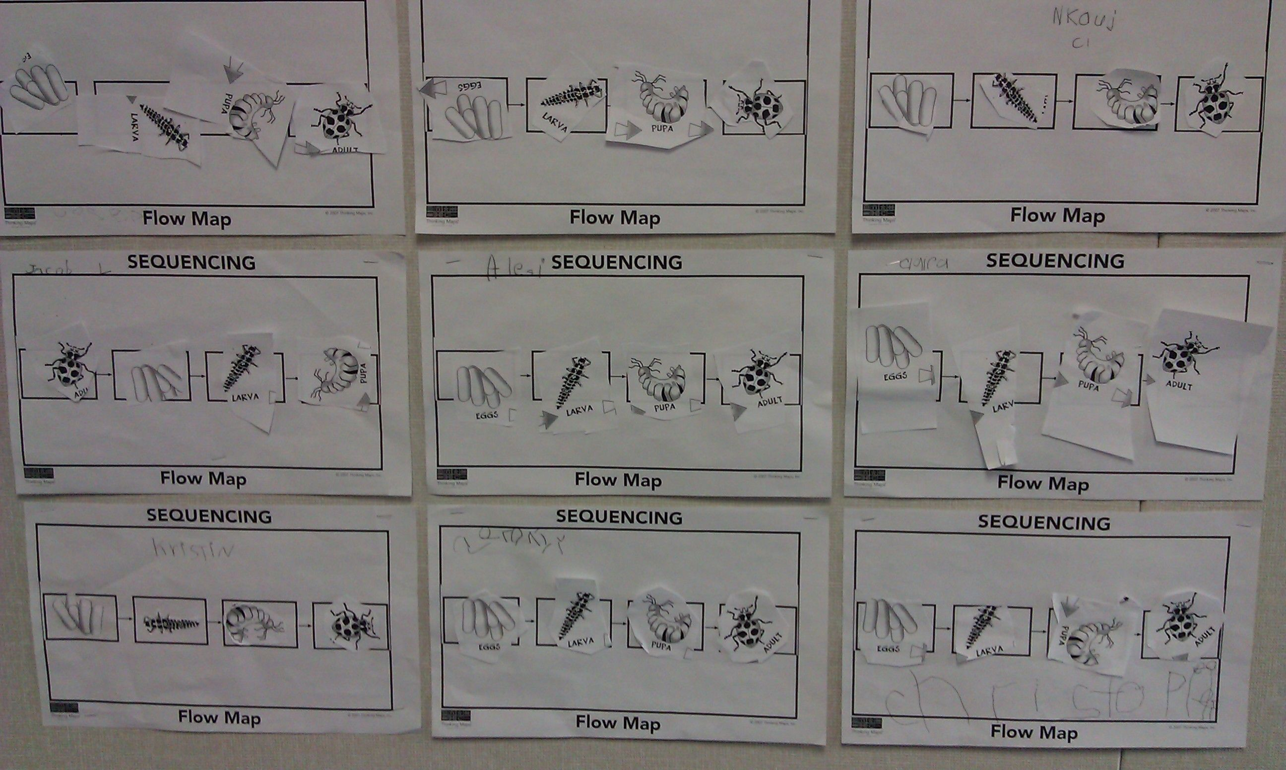 Student Created Thinking Maps Fr Life Cycle Of A Ladybug