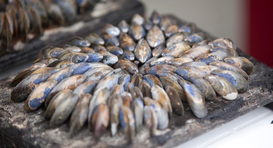 Les moules de bouchots | Charente Maritime