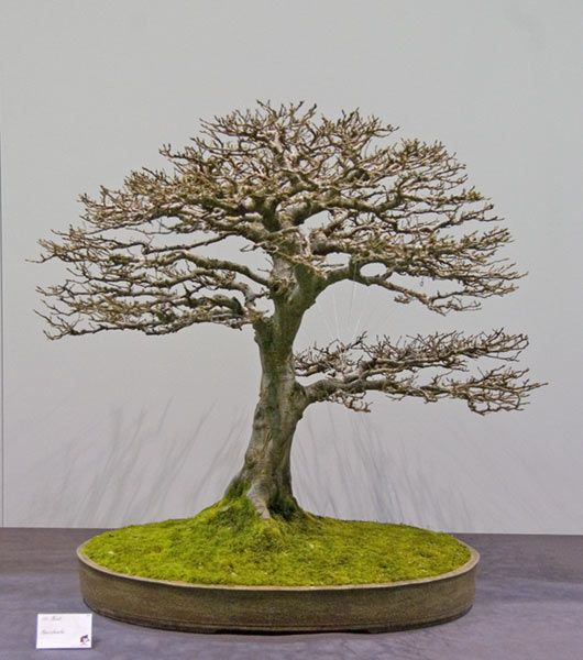 die besten 25 bonsai baum ideen auf pinterest bonsai baum arten bonsai und bonsai pflanzen. Black Bedroom Furniture Sets. Home Design Ideas