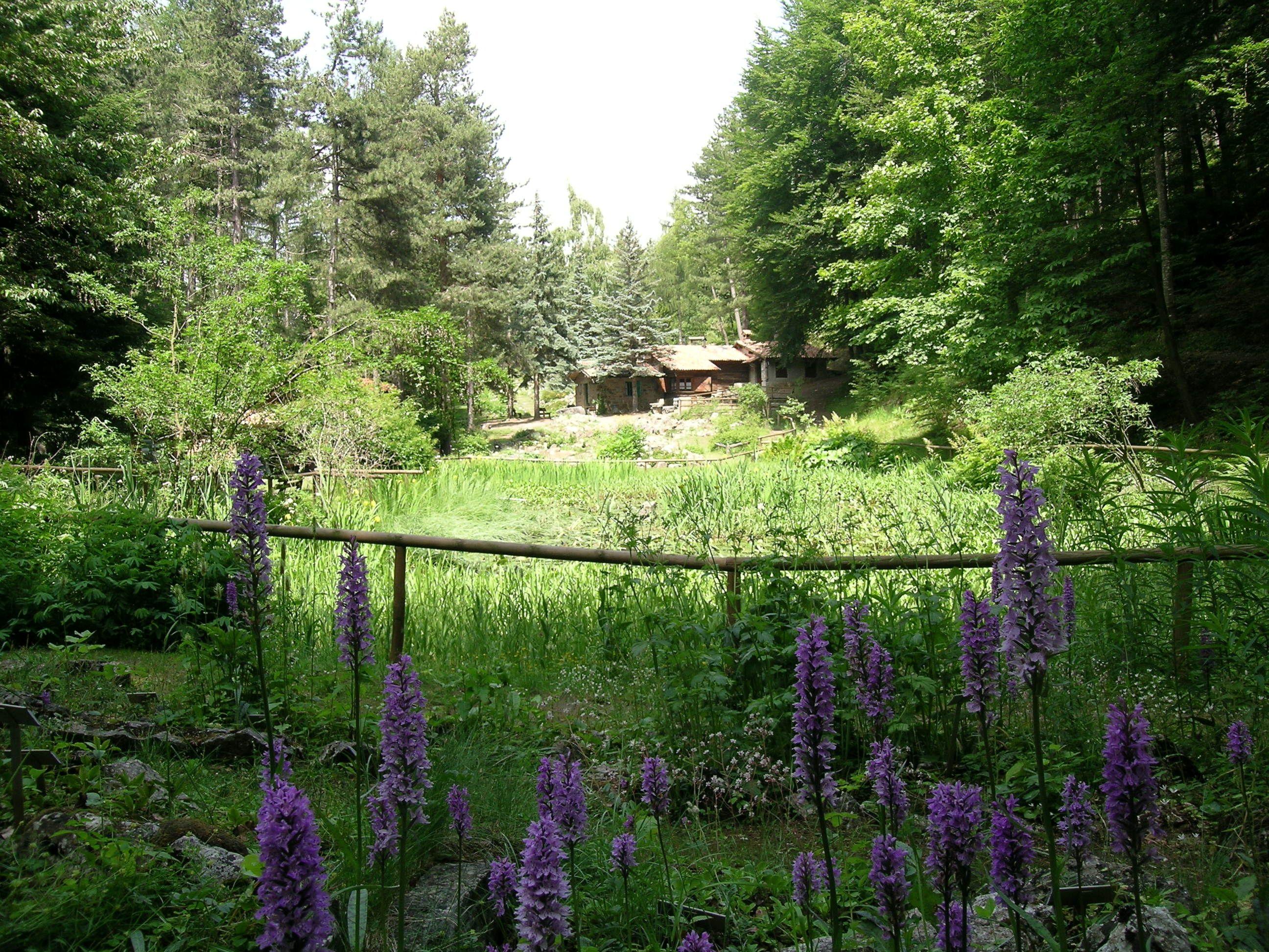 Giardino Pietra Corva : Giardino botanico alpino di pietra corva romagnese pv oltrepò