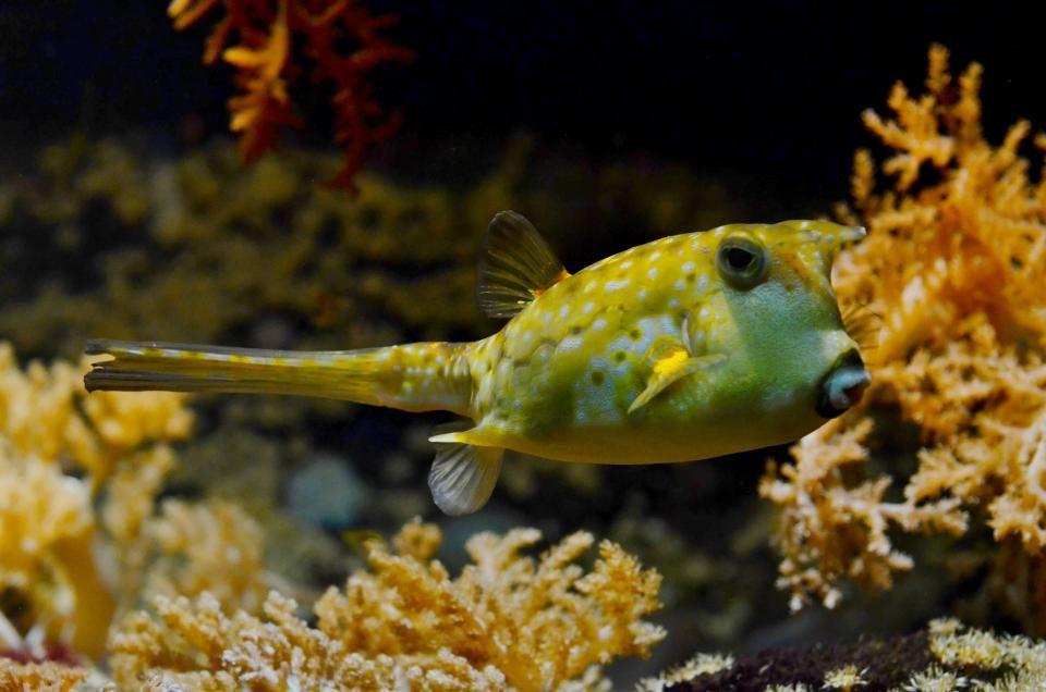 pufferfish blowfish bubblefish -  pufferfish blowfish bubblefish free stock photo Dimensions:4928 x 3264 Size:6.47 MB  - http://www.welovesolo.com/pufferfish-blowfish-bubblefish/