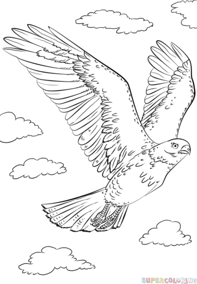 how to draw a hawk flying step by step drawing tutorials for kids and beginners