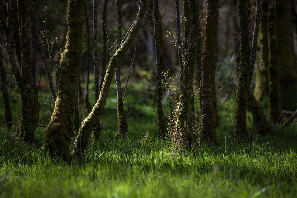 Cumbrian woodland by peter henry woodland deep forest