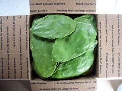 8 lbs Fresh organic edible cactus. Juicing Grade-D. Grown in California. Free Shipping