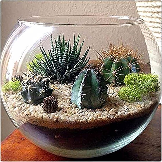 Photo of Make your own terrarium with this DIY recipe #succulent #terrarium #diy #ideas #…