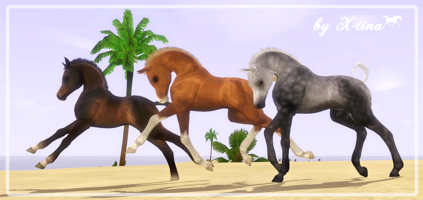Sims 3 Horse Breeds X Tina Sims Equestrian Horses Sims 3