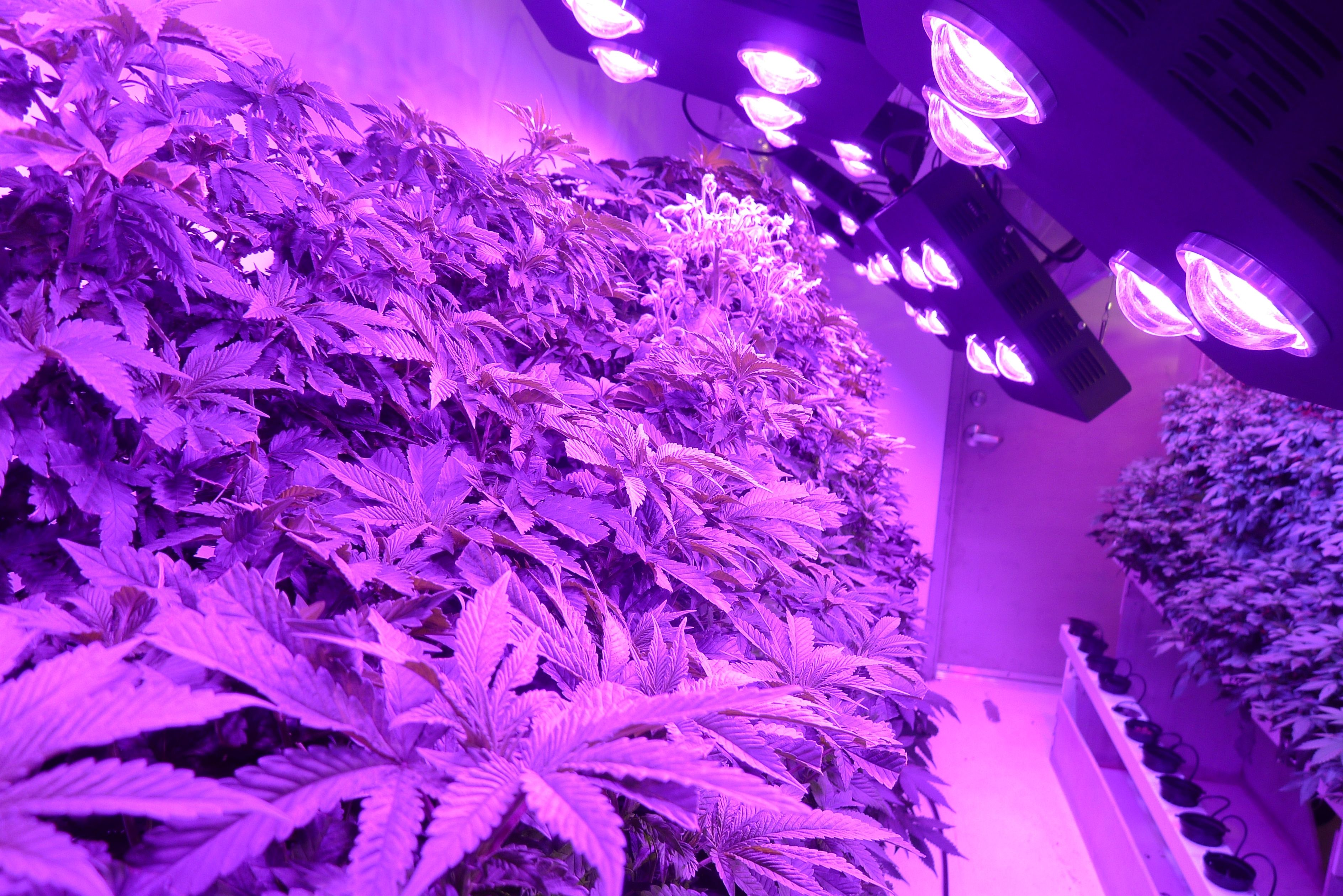 cob lights reflector plant in series growing light the led to roleadro best grow lamp guide