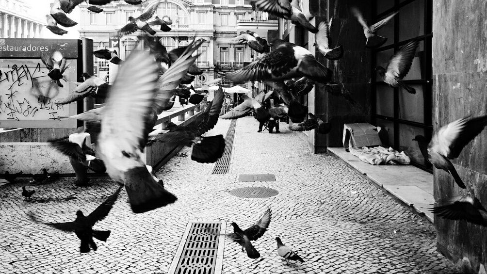 Photograph Pidgeons  by Nelson Oliveira on 500px