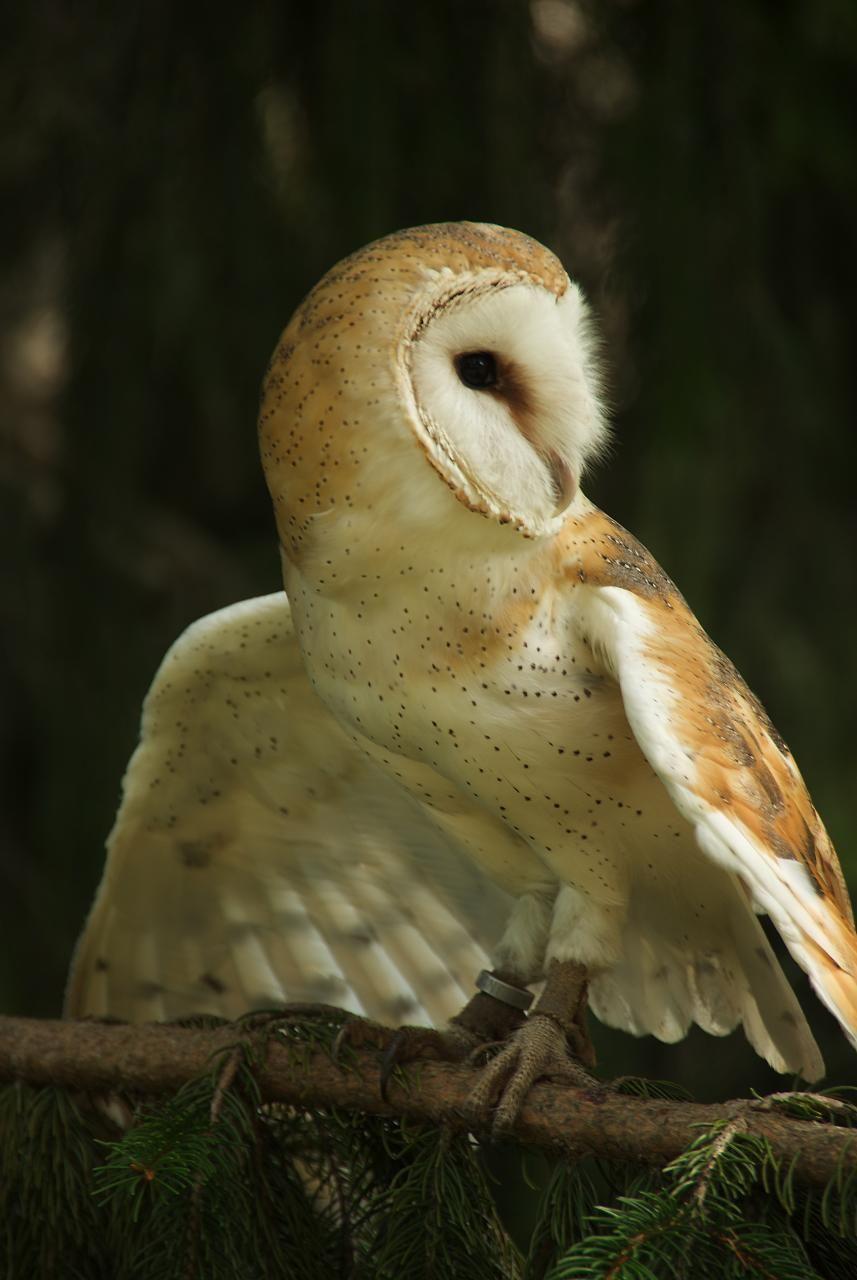 Owl Tumblr Source: Corsica...