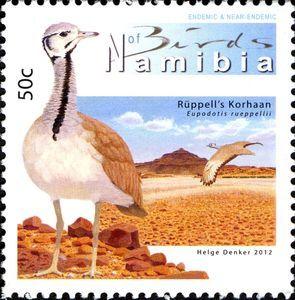Rüppell's Korhaan (Eupodotis rueppellii)