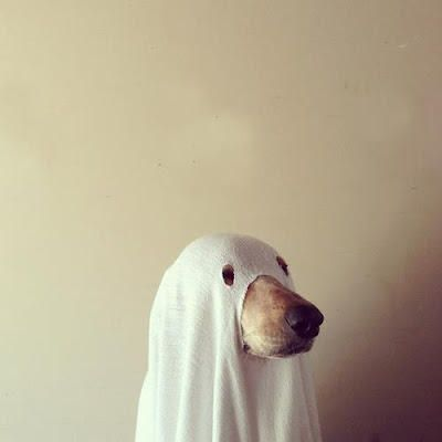 halloween costume idea  ghost dog Max would hate this; & Trick or Treat? | Cuteness Overload | Pinterest | Dog Animal and ...