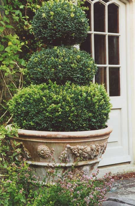3 tier topiary boxwood in planter with ornate relief topiaires pinterest topiaire. Black Bedroom Furniture Sets. Home Design Ideas