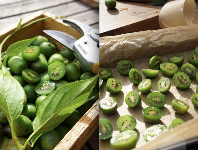 how to grow hardy kiwi