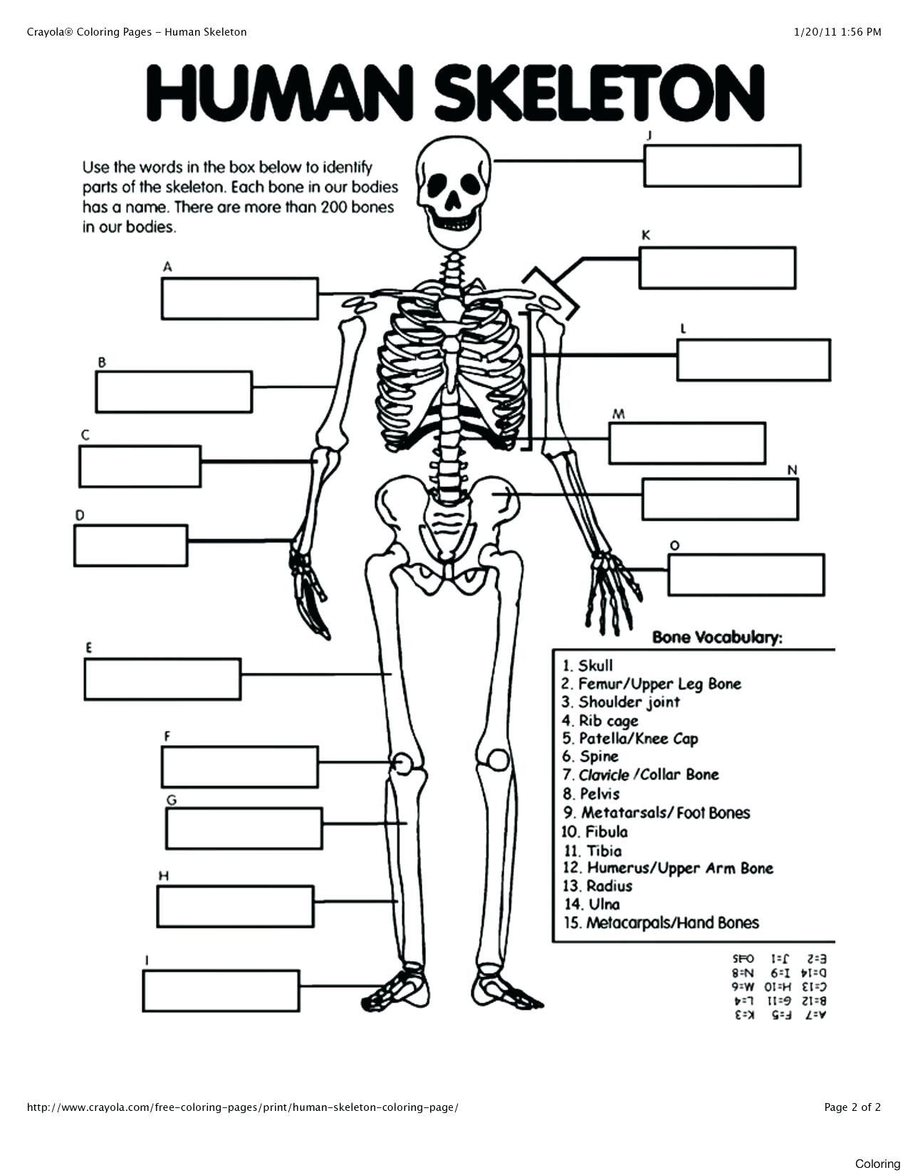 Free Printable Anatomy Worksheets Coloring Pages Anatomy