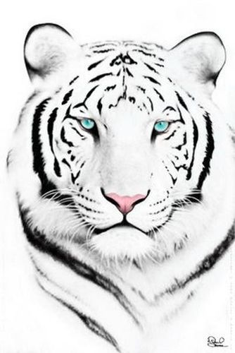 White tiger face tiger face tigers and face for White tiger tattoo