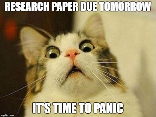 Help with your paper is due cat